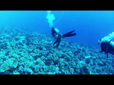Molokini Reef's End Dive - Maui, Hawaii