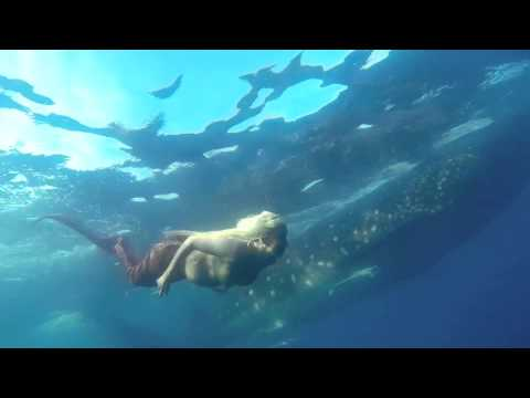 Pregnant Mermaid Swims With Whale Sharks