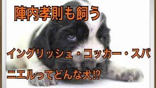 ペットで犬を飼おうと迷っている方へ〜イングリッシュ・コッカー・スパ...