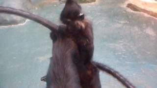 Сходили блин в зоопарк