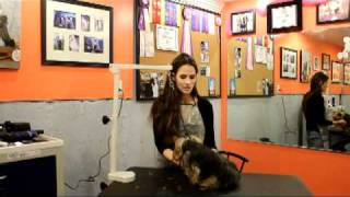 Dog Grooming Courses | Dog Grooming Training