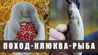 Поход в лес. Осень в тайге. - (разведка, клюква, рыба, жарим мясо, ночевка в избе)
