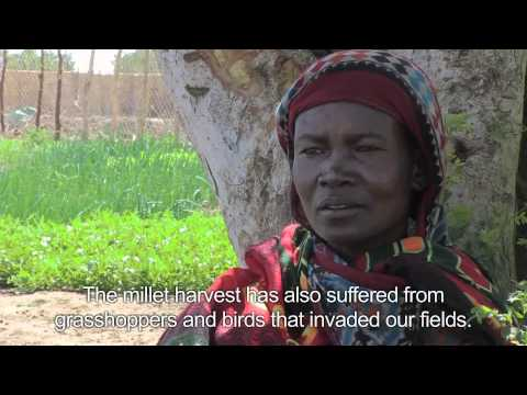 West and Central Africa Crisis: Market Gardens | 2012