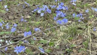 видео Отдых на природе с детьми в Тверской области