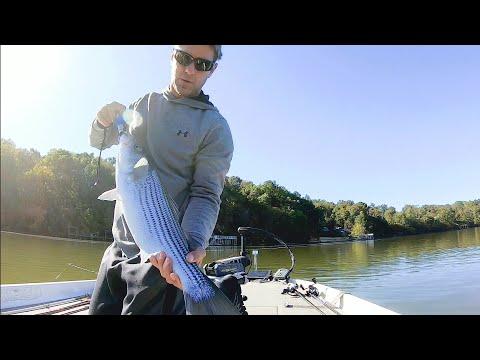Smashing Stripe And Spots At Logan Martin Lake
