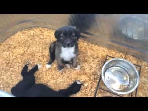 Puppy Barn American Fork Utah