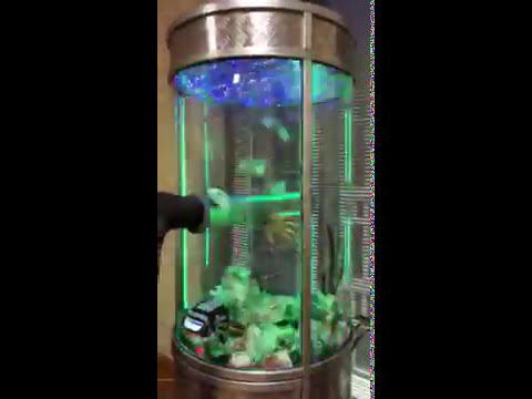развлекательный автомат