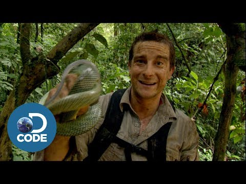 Bear Grylls in Borneo Jungle | Man vs Wild (4/6)