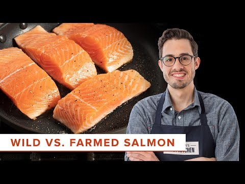 The Scientific Difference Between Cooking Wild And Farmed Salmon