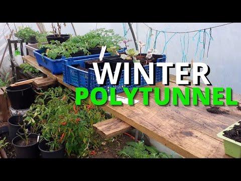Polytunnel Winter Growing UK | Gardening Online