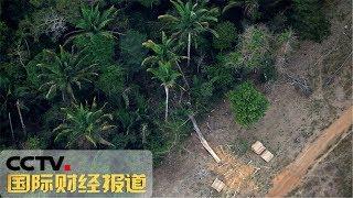 [国际财经报道] 玻利维亚:亚马孙雨林大火仍在持续 | CCTV财经