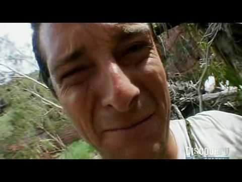 Bear Grylls Eats Live Spider