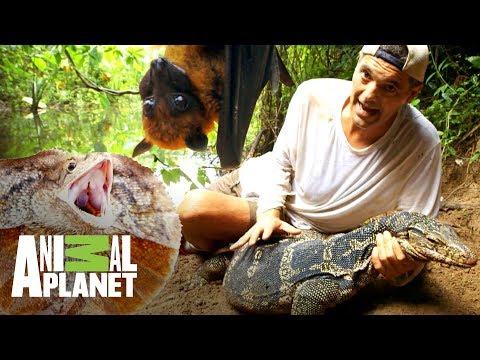 Los encuentros con dragones más emocionantes | Wild Frank: En busca del dragón | Animal Planet