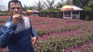 Doktoro esperanto el Aceh promociu la celecio floroj kvin kontinentojn