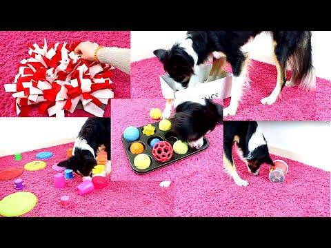 10 DIY Beschäftigungsideen für Hunde