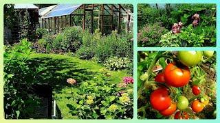 Дача 6 соток в июне Обзор сада и немного огорода