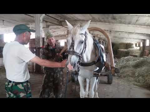 Вопрос: Действительно ли лошадь умеет читать?