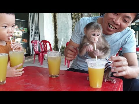 Baby Monkey | Doo And His Family Drink Sugar Cane Juice