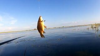Ловля бронзового карася онлайн на поплавочную снасть с лодки. Озеро Круглое-Казачье