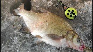 Зимняя рыбалка ВЫВАЖИВАНИЕ КРУПНОГО ЛЕЩА НА ТОНКУЮ ЛЕСКУ