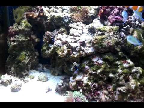 Acuario marino 90 litros de blau youtube for Acuario 90 litros