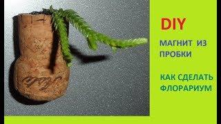 DIY / МАГНИТ ИЗ ВИННОЙ ПРОБКИ / МОЙ ФЛОРАРИУМ