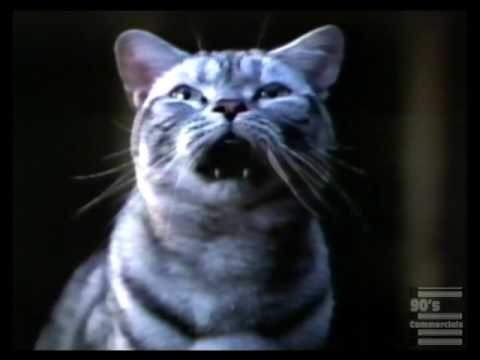 1998 Honda Accord V6 Coupe Singing Cat Commercial