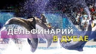 Дельфинарий в Дубае |  Dubai dolphinarium |  Красивое шоу