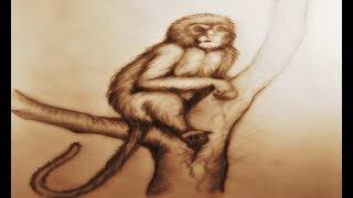 Como Desenhar Macaco - Percepção de Claro e Escuro