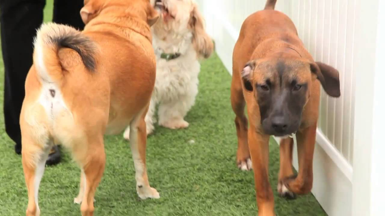 The wags club los angeles dog daycare youtube for Dog boarding los angeles