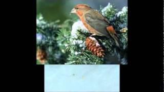 SNowBird--by--Elvis Presley--