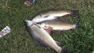 രോഹു, കുയിൽ മീൻ പിടിക്കാൻ പഠിക്കണോ? | Carp fishing Kerala | 3 carp landing technique
