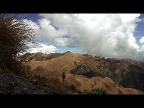 best-places:-the-el-angel-national-park-in-ecuador