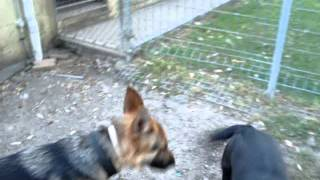 The Canine Classroom - Dog Training With Koda At Boarding School