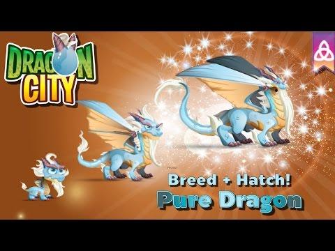 [Dragon City] ผสม + ฟักไข่มังกรสายพันธุ์บริสุทธิ์ Breed + Hatch Pure Dragon   amSiNE