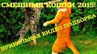 Смешные Кошки 2015 / Funny Cats 2015 / Прикольная Видео Подборка