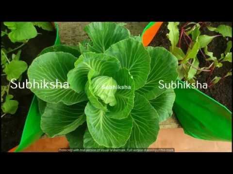 Organic terrace gardening coimbatore grow bags organic terrace gardening coimbatore grow bags organicterracegardening solutioingenieria Gallery