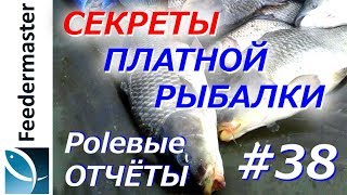 Секреты платной рыбалки. Карп, белый амур, карась весной