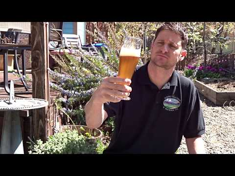 Biscuit 4L Rice Malt Beer Tasting and Recipe Gluten Free Beer