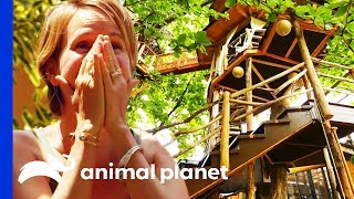 This Insane Hawaiian Treehouse Has A 60ft High Crows Nest! | Treehouse Masters