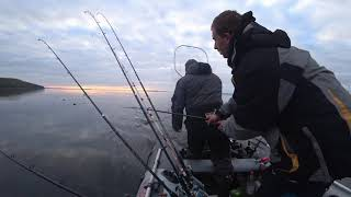 Очередная лососевая рыбалка на севере Карелии Пяозеро Кумское водохранилище