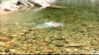 川遊びです.