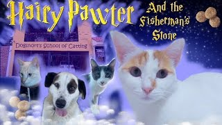 Hairy Pawter and the Fisherman's Stone part 1- Cat Harry Potter Parody | Spot the Kitty STK