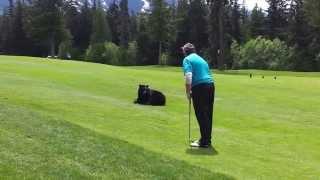 ゴルフ場に乱入したクマー、ゴルフボールを気に入るもおじさんたちの説得を受ける