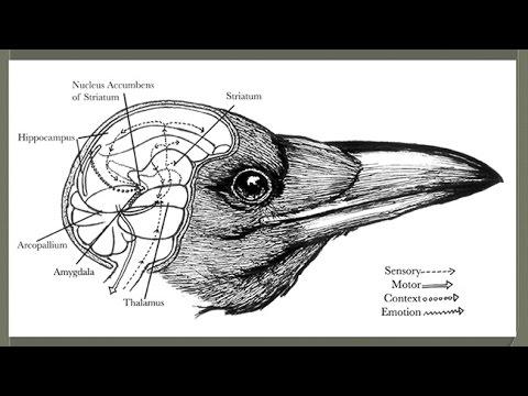 CARTA: Awareness of Death & Mortality: Other Mammals;Corvid Birds; Children's Understanding of Death