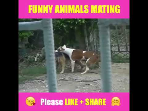 ANIMALS MATING - Try Not To Laugh- Funny Video | YouTube