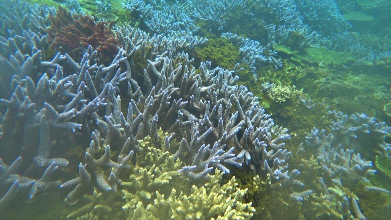澎湖南方四島之1 - 藍色珊瑚礁20190511~12 - YouTube