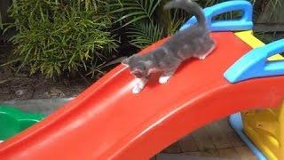 Весёлые и смешные котята катаются на горках. Сборник