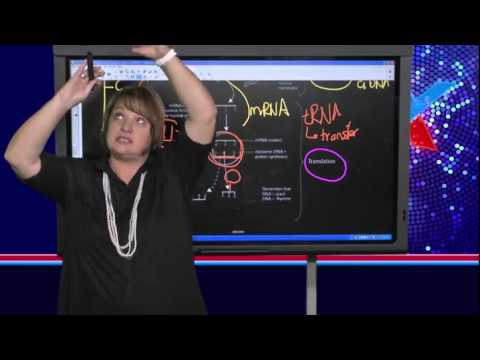 DNA & Protein Synthesis (Live)