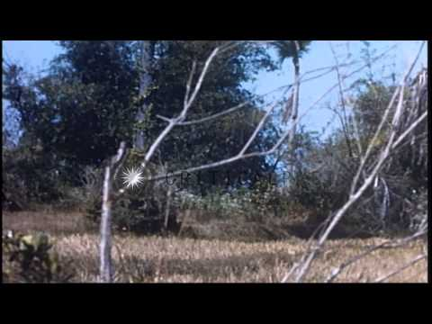 US Army 1st Infantry Division soldiers firing 90 mm RR from M-113 during their co...HD Stock Footage
